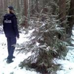 Patrol policji w lesie